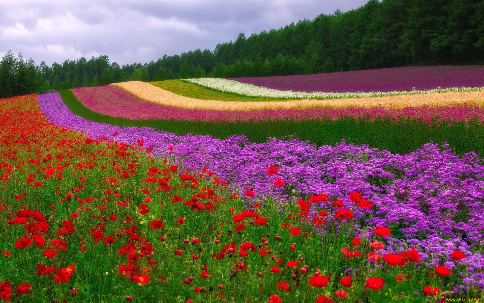 природа красивые картинки разные цветы замечательно поработал
